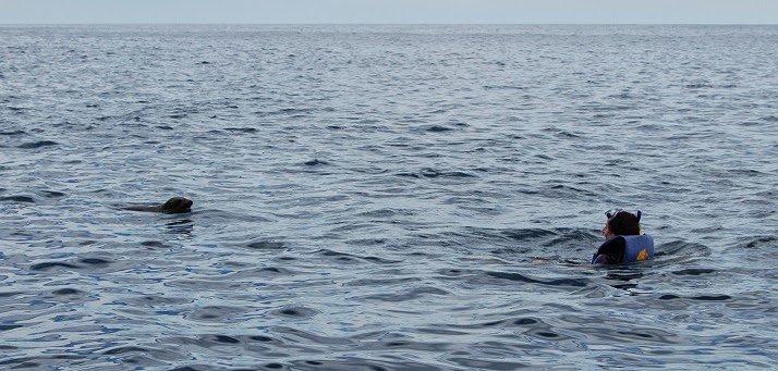 nuotare con leoni marini