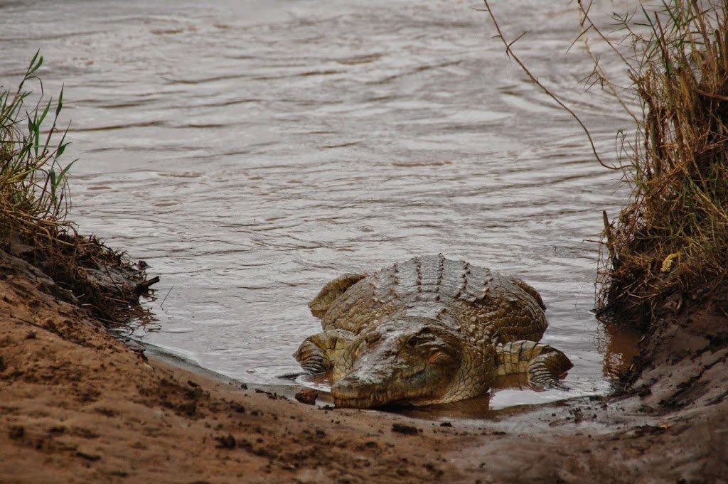 Safari allo Tsavo est National Park
