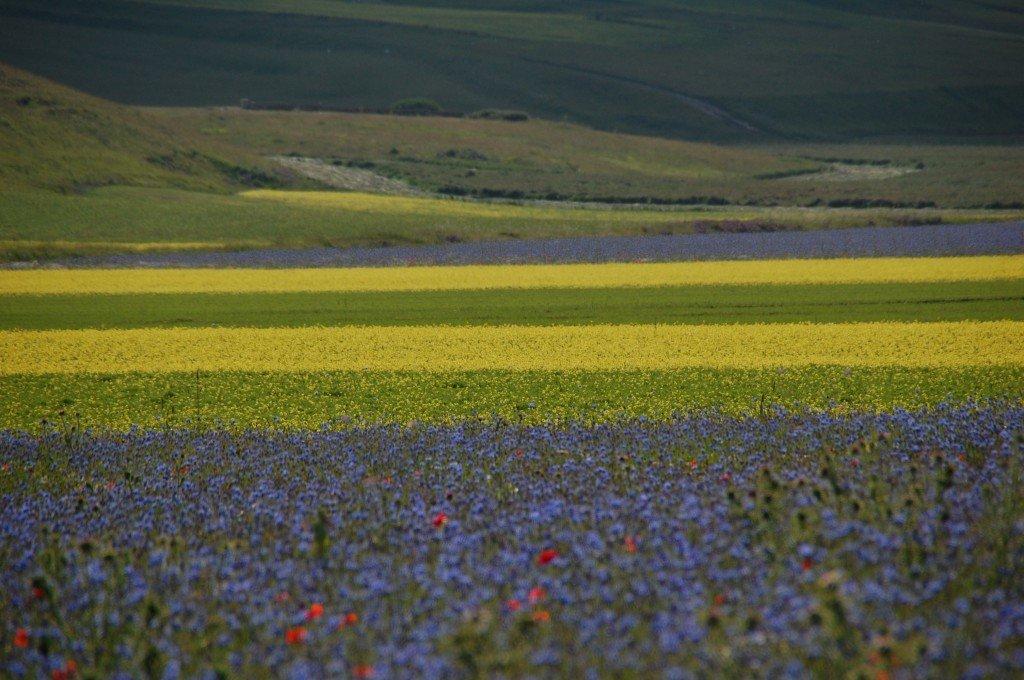 La festa della fioritura a Castelluccio di Norcia - In viaggio con Fabila