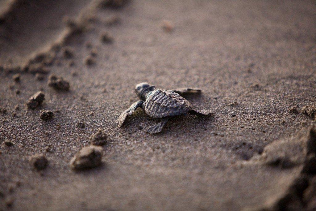 organizzare turtle waching in Oman
