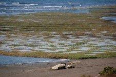 penisola-di_valdes_patagonia