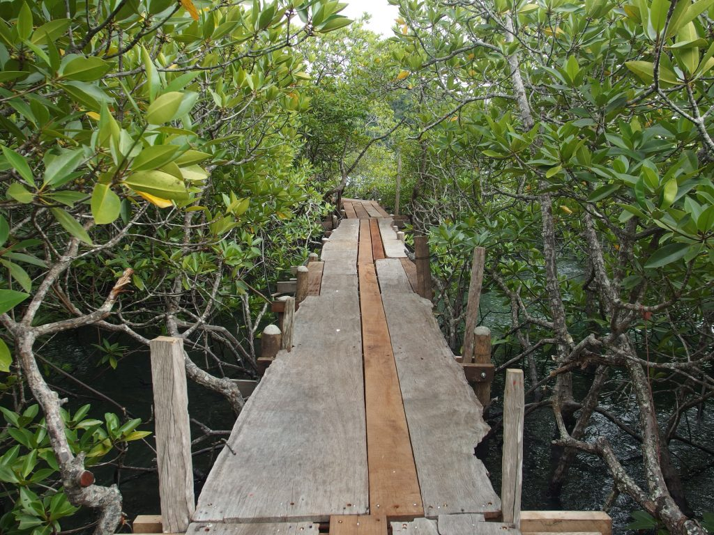 mangrovie a koh chang